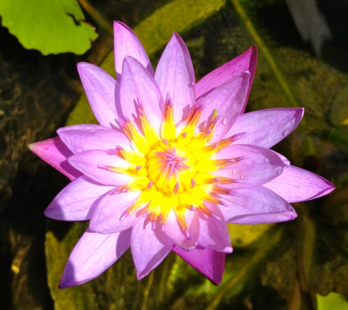 Blessings from the Liberated Lotus